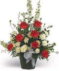 A Red and White Sympathy Arrangement